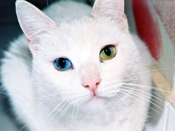 1280px-Cat_Eyes