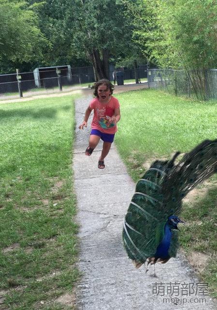 被孔雀吓逃跑的小女孩引发了各类创意PS