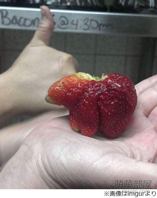 一颗长得像极了熊的草莓